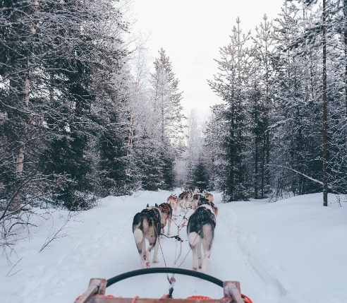 Husky sled on their way to Santa Clause Village